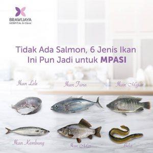 Tidak ada Salmon, 6 jenis ikan ini pun jadi untuk MPASI